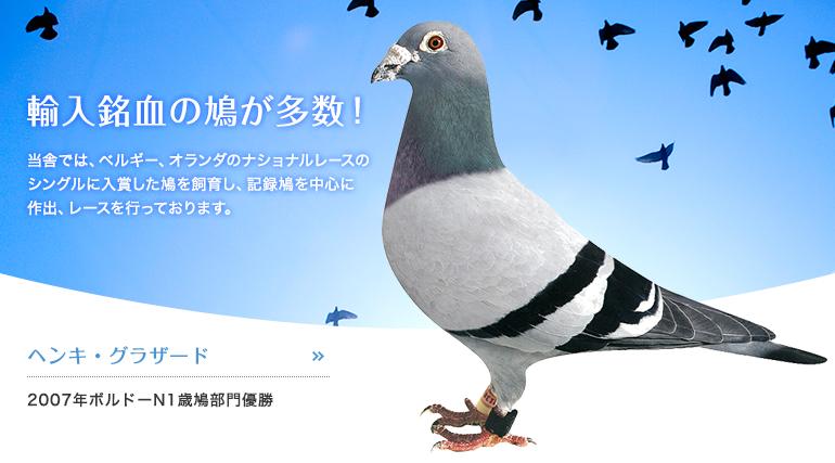 輸入銘血の鳩が多数! ヘンキ・グラザード2007年ボルドーN1歳鳩部門優勝